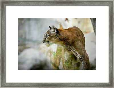Reno Framed Print by G Wigler