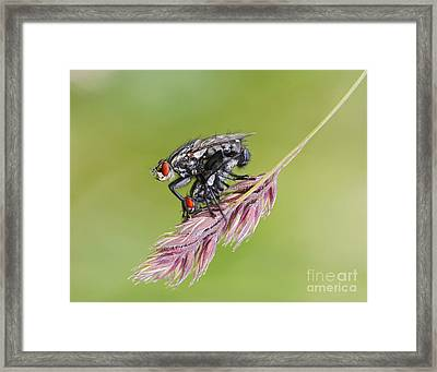 Reproduction - At The Height Of Bliss Framed Print by Michal Boubin