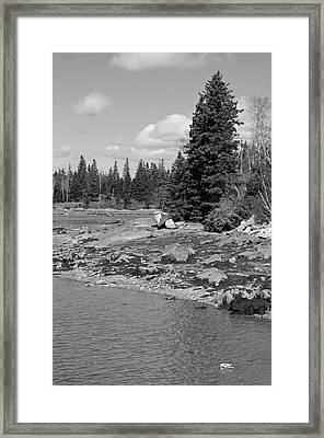 Resting Framed Print by Becca Brann