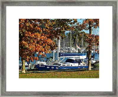 Resting Framed Print by Connie Handscomb
