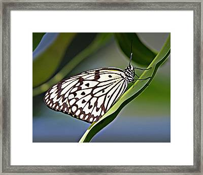 Rice Paper Butterfly 8 Framed Print