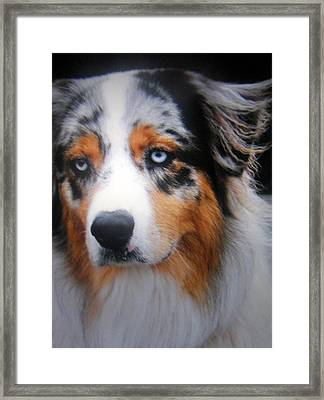 Framed Print featuring the photograph Riley by Antonia Citrino