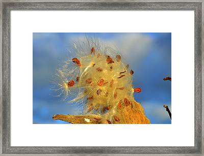 Rise And Shine Framed Print by Dianne Cowen