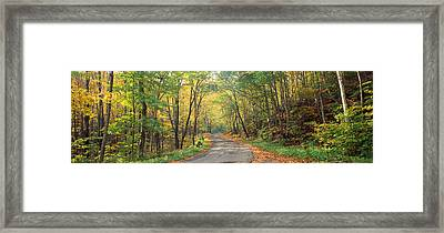 Road Passing Through Autumn Forest Framed Print by Panoramic Images