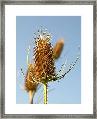 Roadside Thistle - 2 Framed Print