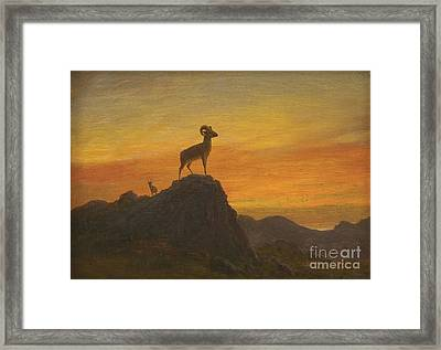 Rocky Mountain Sheep Framed Print by MotionAge Designs