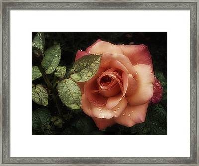 Romancing The Rose Framed Print