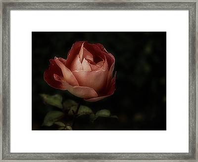 Romantic November Rose Framed Print