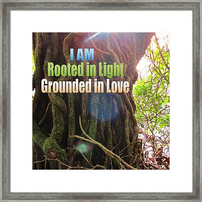 Rooted In Light Framed Print by Dawn Richerson