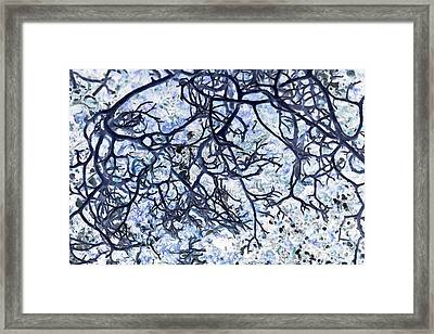 Roots Framed Print by Edouard Coleman