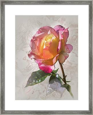 Rosa, 'glowing Peace' Framed Print