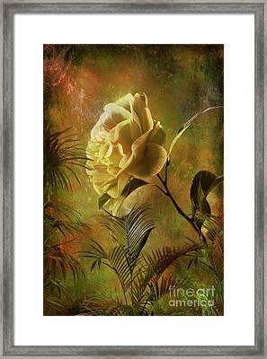 Rose Framed Print by Andrzej Szczerski