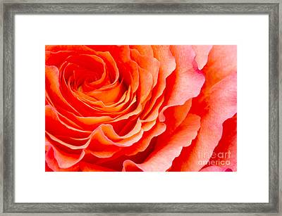 Rose Framed Print by Angela Doelling AD DESIGN Photo and PhotoArt