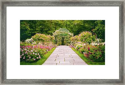 Rose Garden Walkway Framed Print by Jessica Jenney