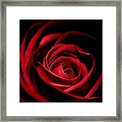 Rose I Framed Print by Andreas Freund