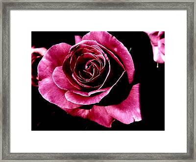 Rose Framed Print by Mohammed Nasir