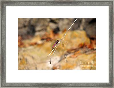 Framed Print featuring the photograph Fuchsia Fly by Al Powell Photography USA