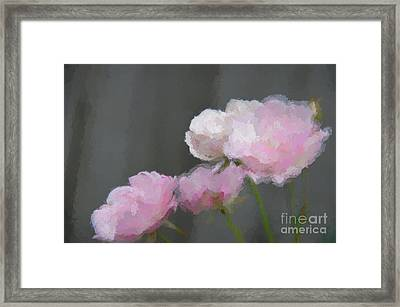 Roses - Bring On Spring Series Framed Print