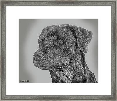 Rottweiler Framed Print