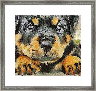 Rottweiler Puppy Portrait Framed Print