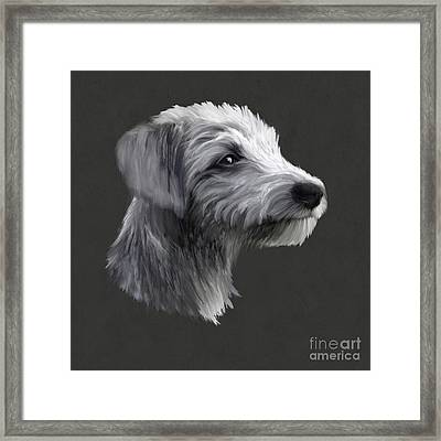 Rough Coated Lurcher  Framed Print