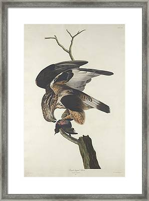 Rough Legged Falcon Framed Print by Anton Oreshkin