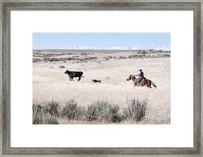 Round Up Framed Print by Cindy Singleton
