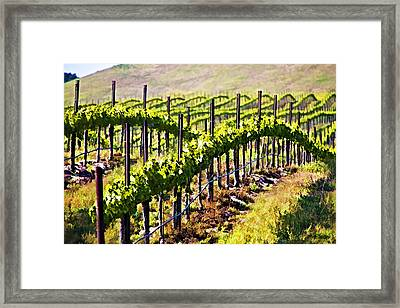 Rows Of Vines Framed Print by Patricia Stalter