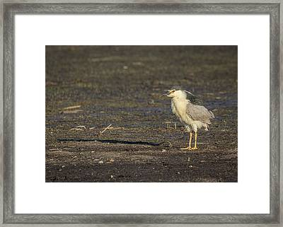Ruffled Feathers Framed Print