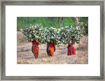 rural Rajasthan Framed Print by Joana Kruse