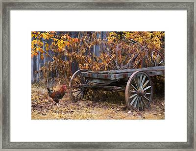 Framed Print featuring the photograph Rusty by Robin-Lee Vieira