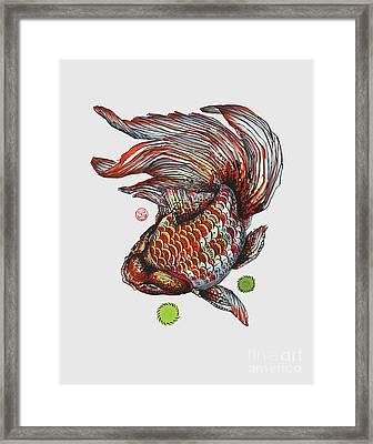 Ryukin Goldfish Framed Print by Shih Chang Yang