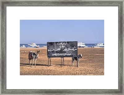 Safaga - Egypt Framed Print
