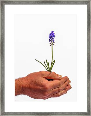Safely Growing Framed Print by Patricia Hofmeester