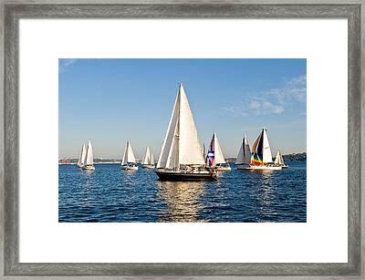 Sailboats Framed Print by Tom Dowd