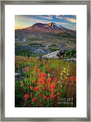 Saint Helens Paintbrushes Framed Print by Inge Johnsson