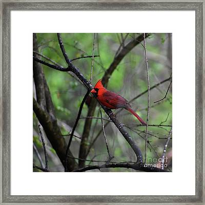 Framed Print featuring the photograph Saint Louis by Skip Willits