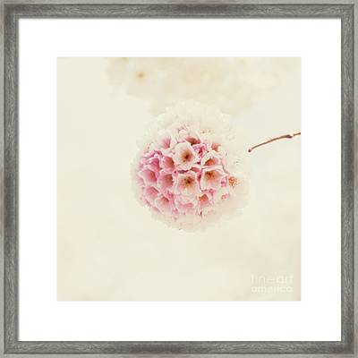 Sakura Framed Print by Starfish Media