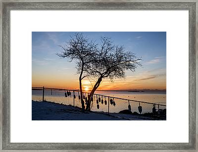 Salem Willows On An Icy Morning At Sunrise Framed Print by Toby McGuire