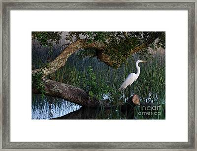 Salt Marsh Heron Framed Print by Dale Powell