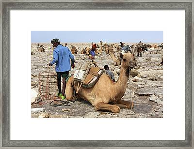 Salt Miners Of The Danakil Framed Print