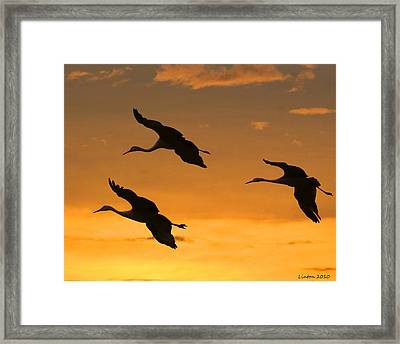 Sandhill Cranes At Dusk Framed Print