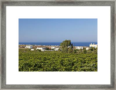 Santorini Vineyard Landscape Framed Print
