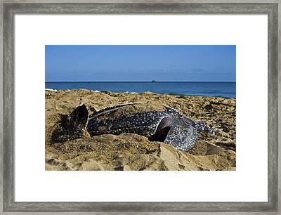 Saying Goodbye Framed Print by Sarita Rampersad
