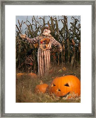 Scarecrow In A Corn Field Framed Print