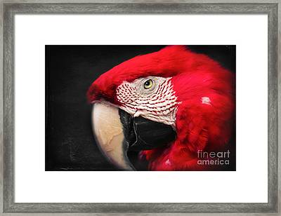 Scarlet Macaw - Ara Macao Framed Print by Sharon Mau