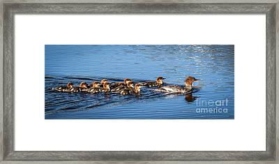 Schools In Session Framed Print by Webb Canepa