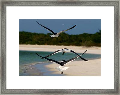 Sea Birds Framed Print