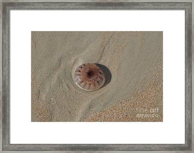 Sea Creatures Framed Print