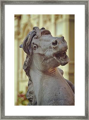 Navona Sea-horse Framed Print by JAMART Photography